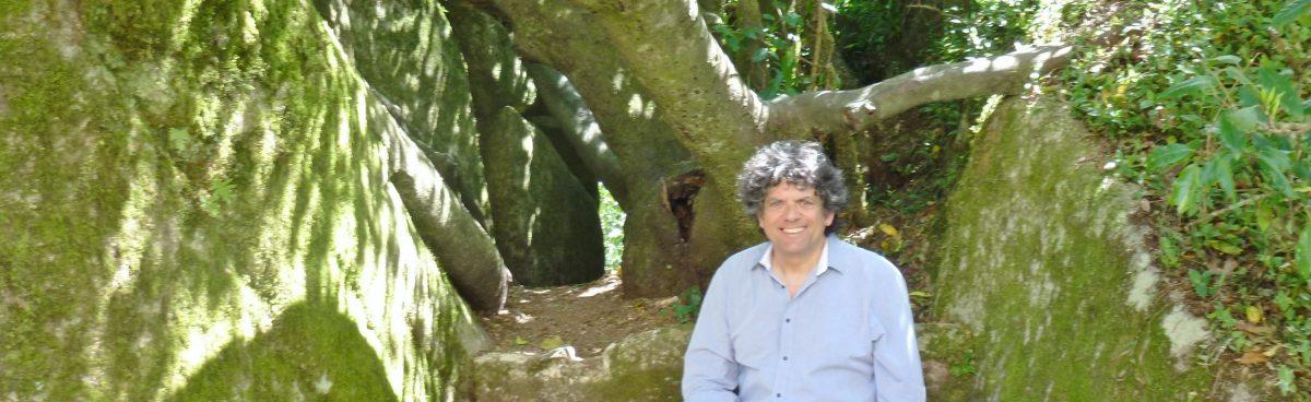 Willee und Baum (2)