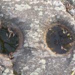 Schalensteine